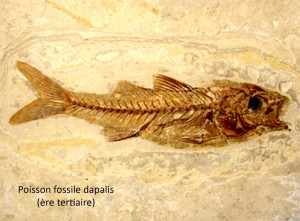 dapalis (poisson)