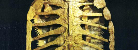 Coup de chaud pour l'expo 2018 Fossiles & Minéraux